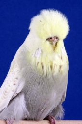 best-beginner-young-bird_j-m-huxley
