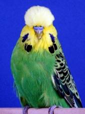 cc-opaline-green-aa_c-bowman
