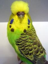 Best Young Bird Opp Sex - Salvador Riambau