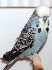 Best Young Bird - Ole Vinding