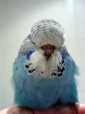 svetlana-folomeeva-young-bird-015