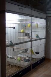 svetlana-folomeeva-aviary-003