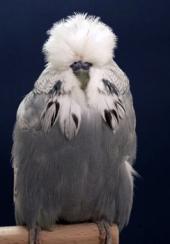 Best Young Bird - Daniel Lütolf