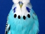 World Class Budgerigars