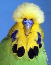 fb13-lightgreen-cock-2009
