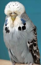 fb18-grey-hen-2010