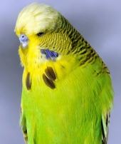 Best Young Bird - Pierre Archambaud