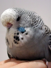 svetlana-folomeeva-young-bird-014